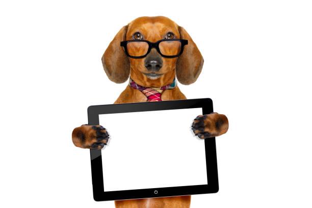 Dachshund sausage dog on business trip picture id693468548?b=1&k=6&m=693468548&s=612x612&w=0&h=s8drqvt hze4ixdryylp4o0r97hiam3pei fsui9tx8=