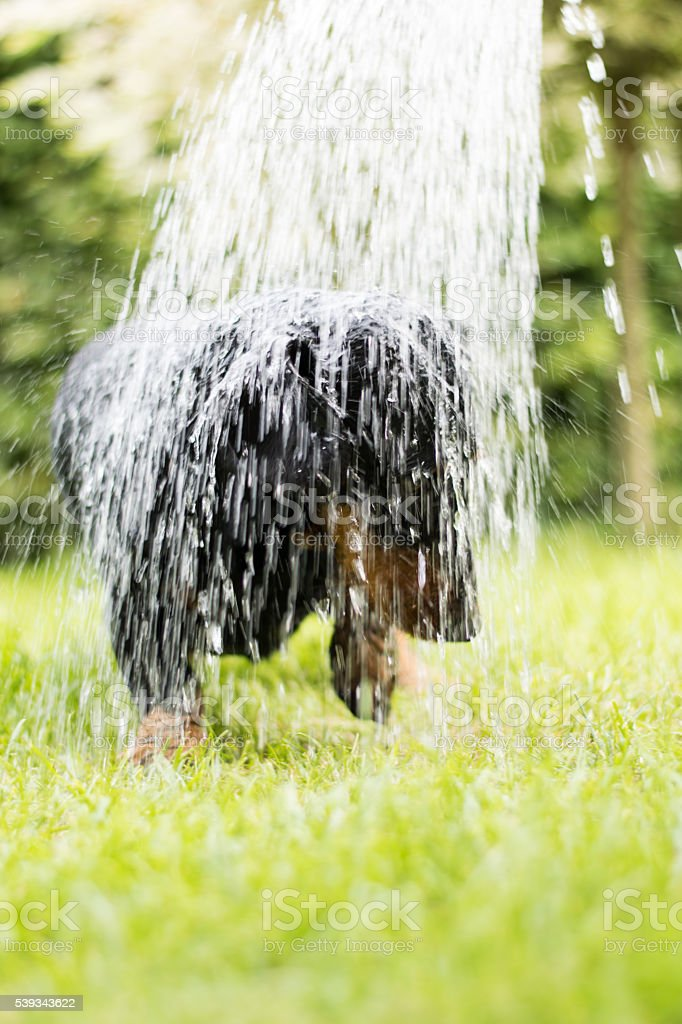 Dachshund shower watering can stock photo