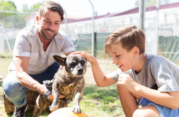 Dad and his son taking care of abandoned dog in animal shelter stock photo