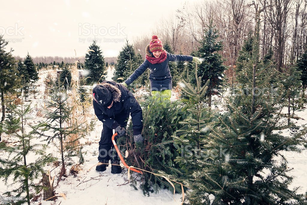 Dad cutting perfect Christmas tree with helping daughter outdoors winter. stock photo