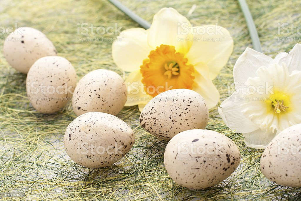Daffodil and easter eggs royalty-free stock photo