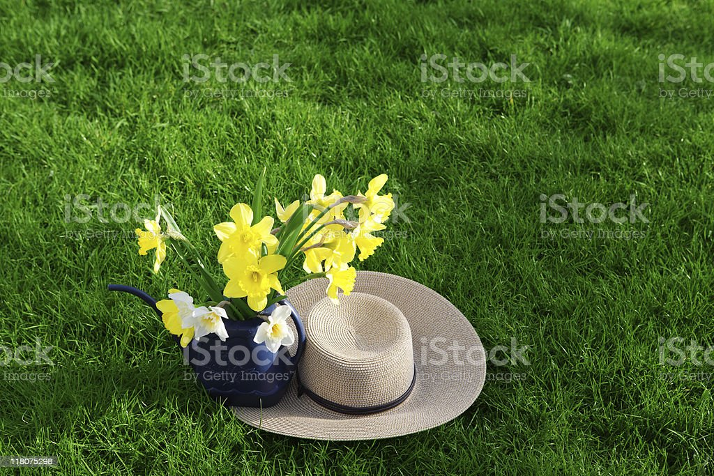 Daffodil and Hat royalty-free stock photo