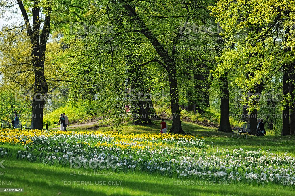 Daffodil blossom in Schwerin park with people spring royalty-free stock photo