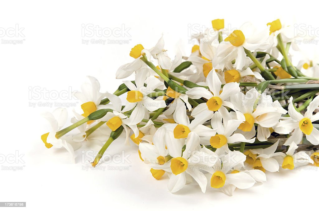 Daffodil bouquet royalty-free stock photo