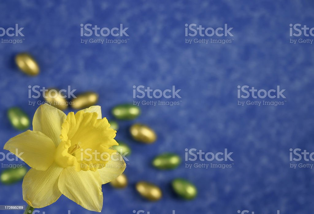 Daffodil & Easter Eggs royalty-free stock photo