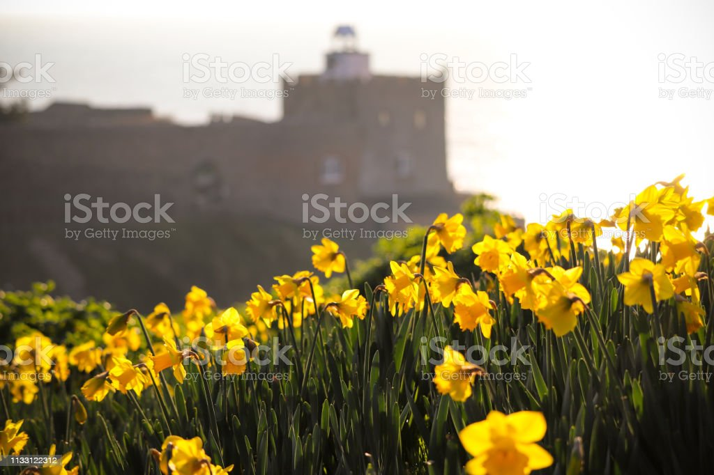 Daffodils at Sidmouth beach - Royalty-free Beach Stock Photo
