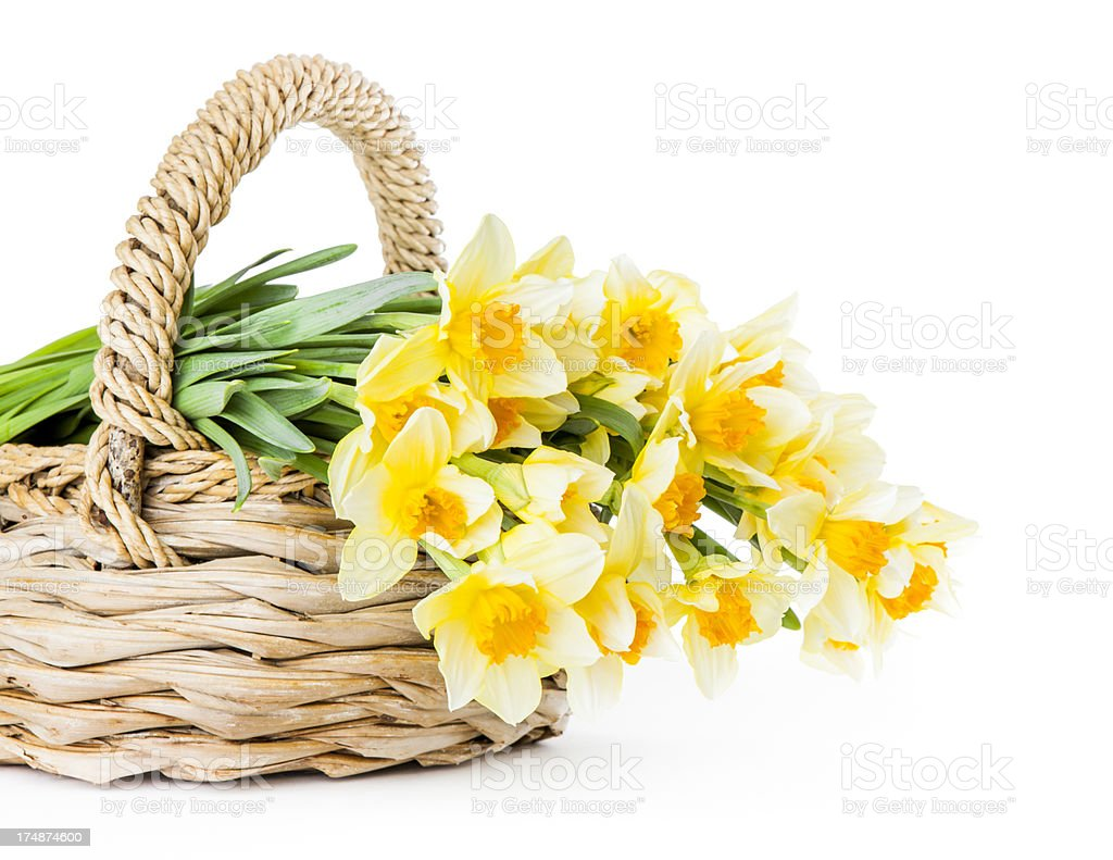 Daffodils in a Basket royalty-free stock photo