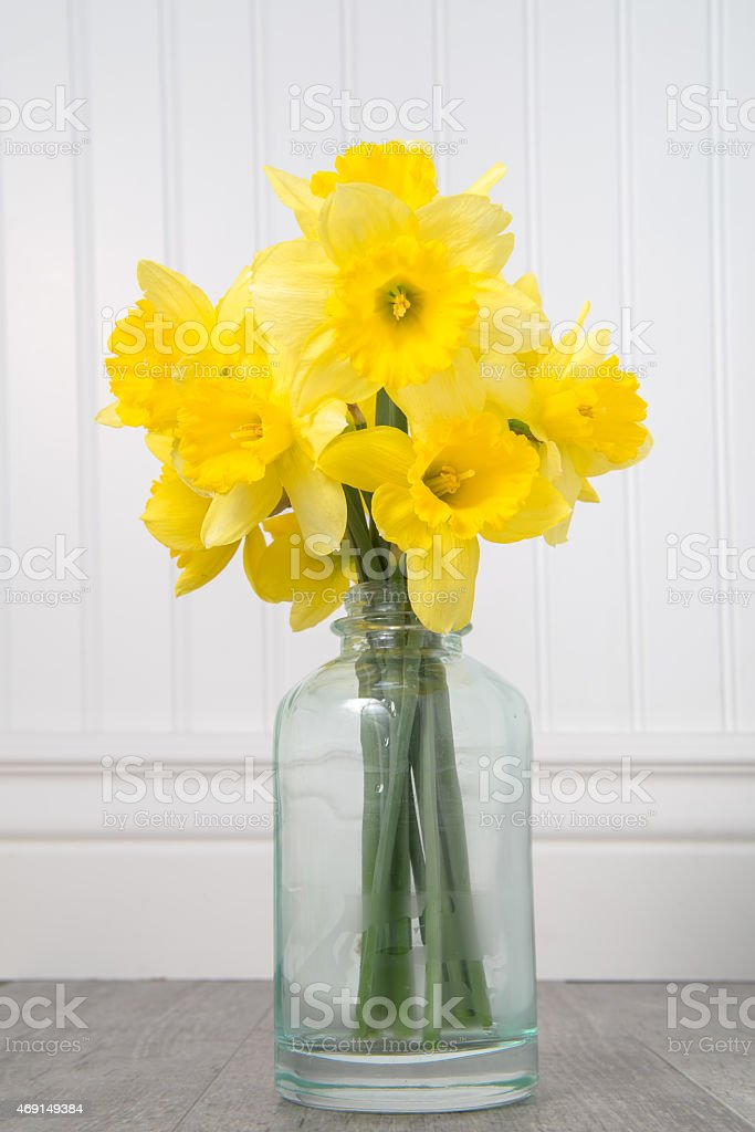 Daffodils in a bottle on a white beadboard background stock photo