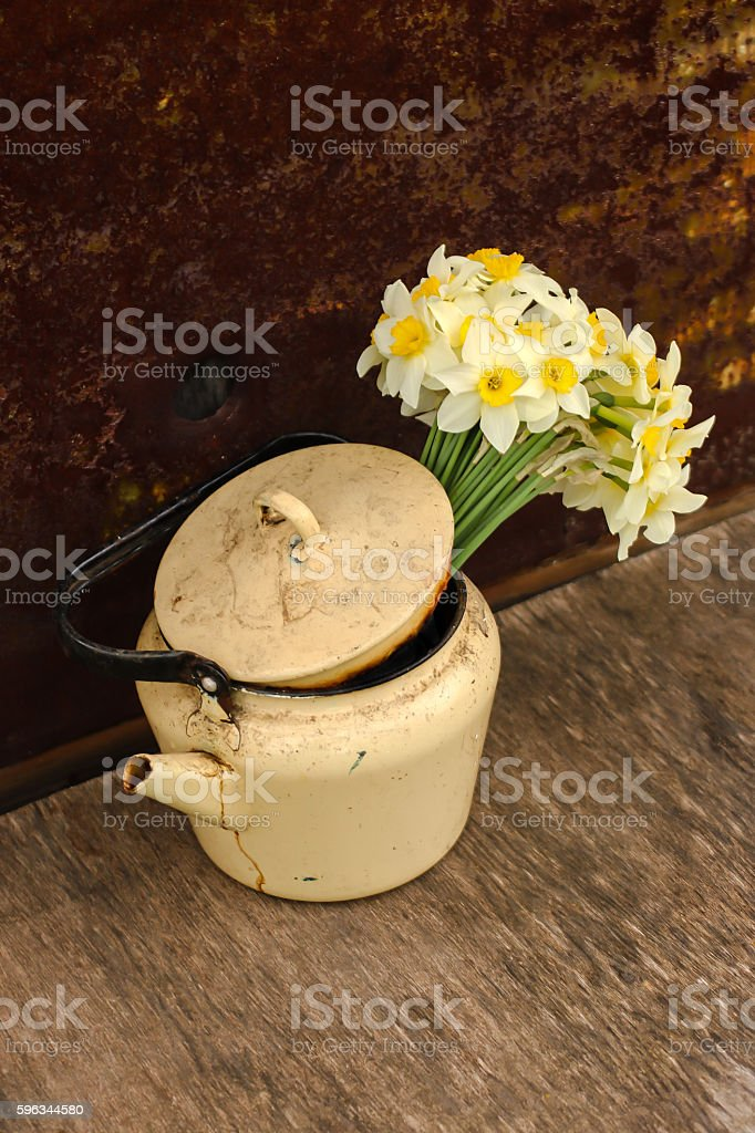 Daffodils in a pot royalty-free stock photo
