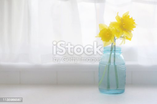 3 yellow daffodils by window, high key, in blue glass jar with copy space. Bright and airy with flowing curtains.