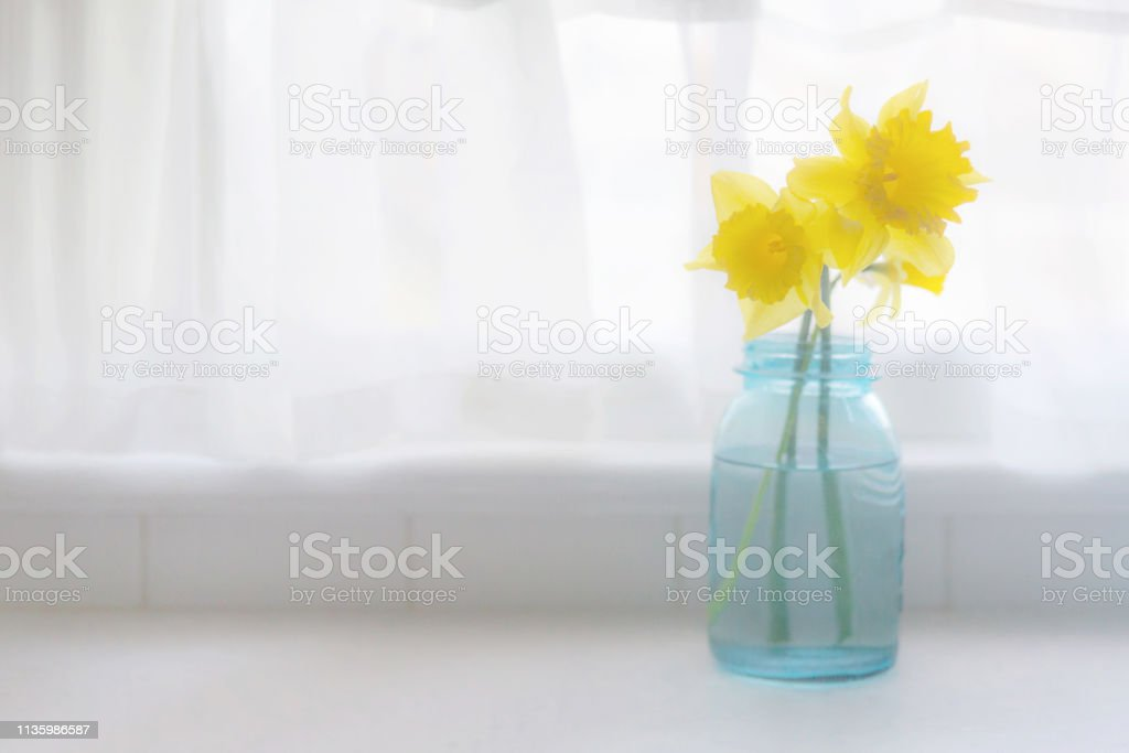 Daffodils in front of window - high key with copyspace stock photo