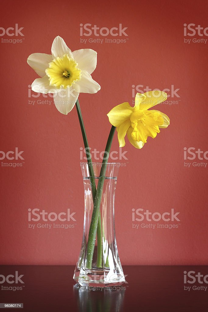 Daffodils in glass vase royalty-free stock photo