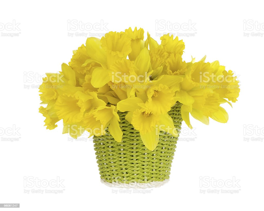 Daffodils In Green Woven Basket royalty-free stock photo