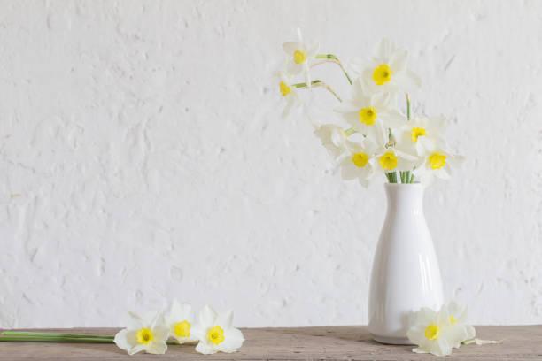 daffodils in white vase on white background stock photo