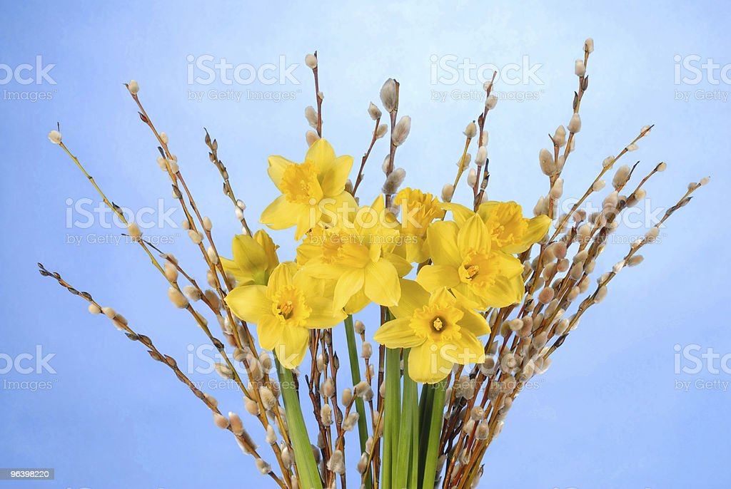 Daffodils on Blue - Royalty-free Blossom Stock Photo