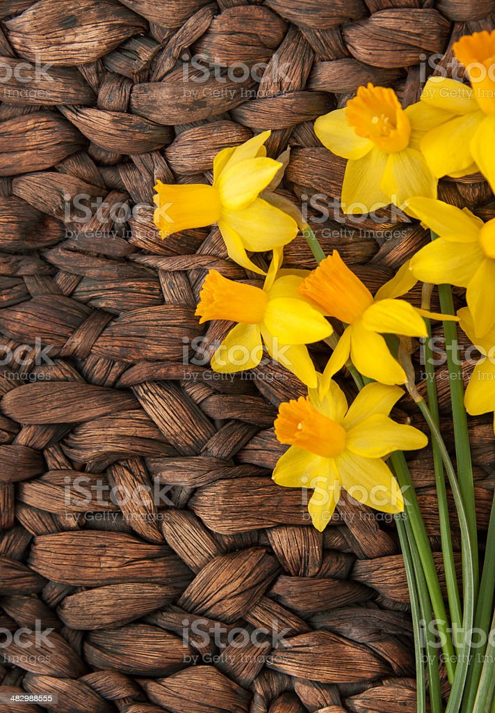 Daffodils on Contrasting Background stock photo