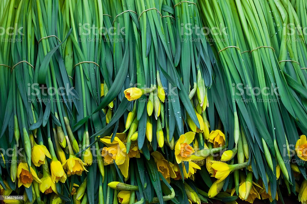 Daffodils On Sale royalty-free stock photo