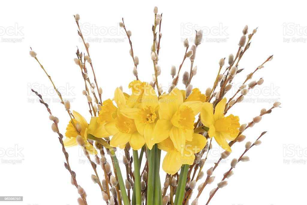Daffodils on White - Royalty-free Blossom Stock Photo