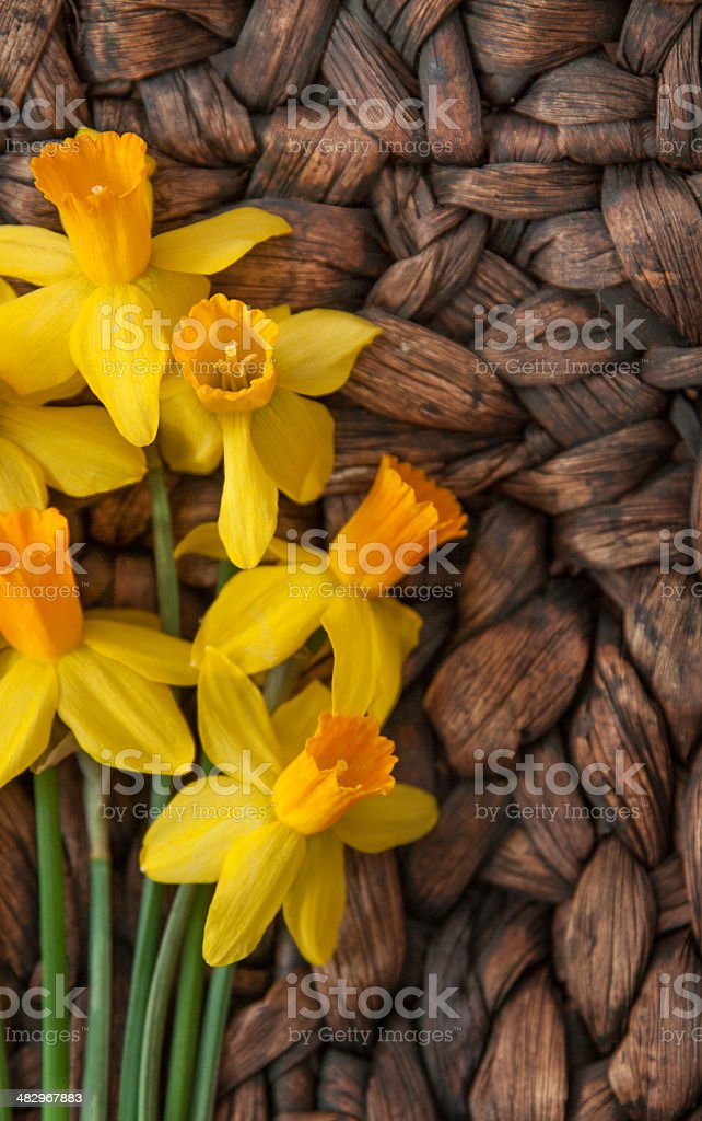 Daffodils on Woven Background stock photo