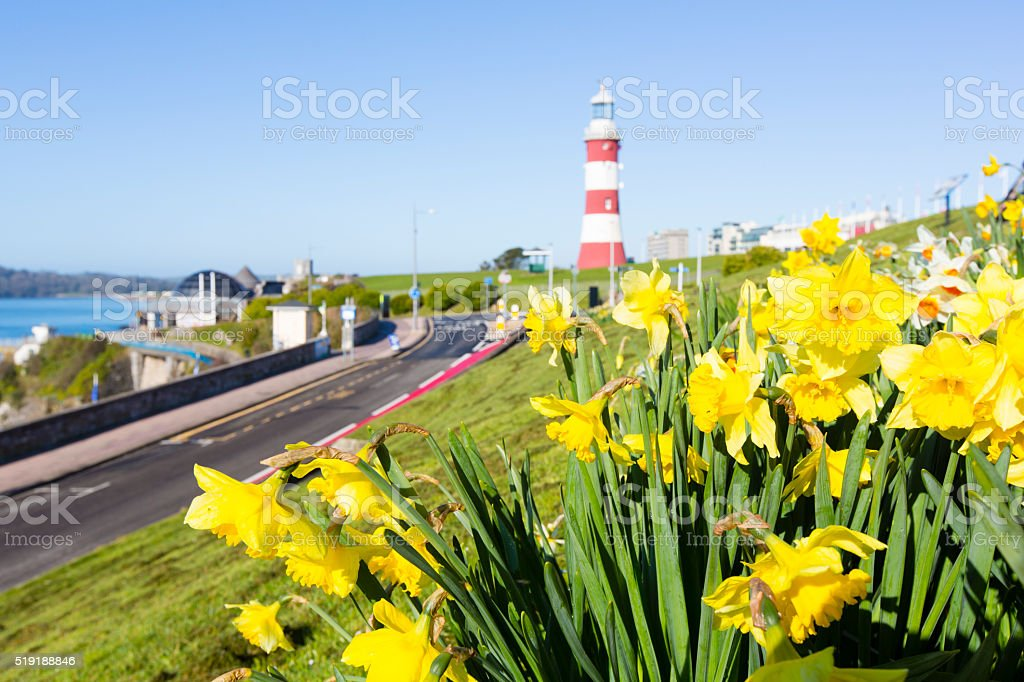 Daffodils - Plymouth Hoe stock photo