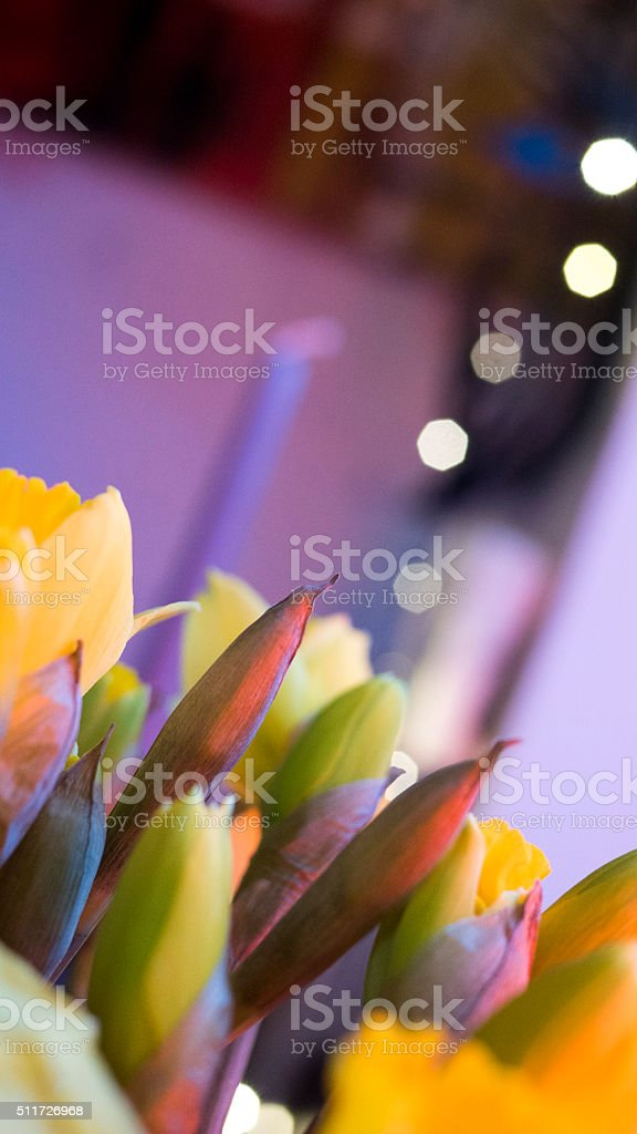 Daffodils with a splash of spring colour stock photo