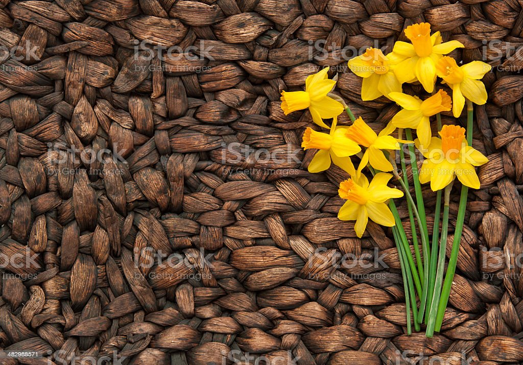 Daffodils with Copy Space on the Left stock photo