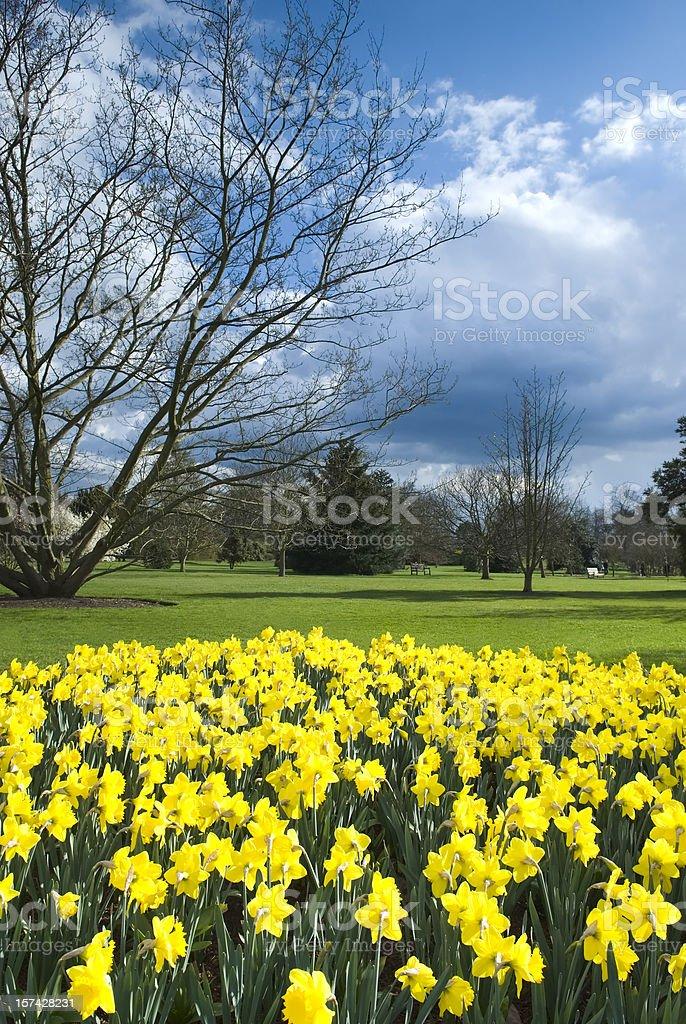 Daffodils world (Garden Image) - XIV royalty-free stock photo