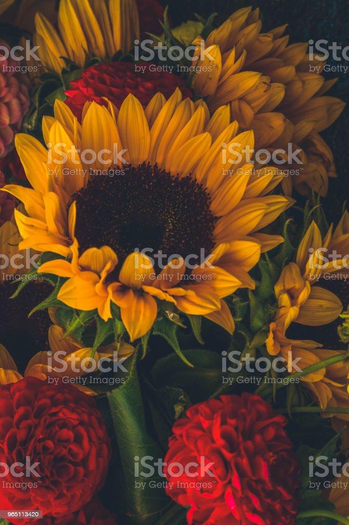 Dahlia and sunflowers zbiór zdjęć royalty-free
