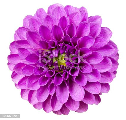 Purple flower on a white background.