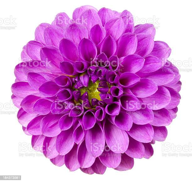 Dahlia picture id184373581?b=1&k=6&m=184373581&s=612x612&h=go5kymisrz5ealilr7xgzlu5ke6emz0sp5jujz6ttti=