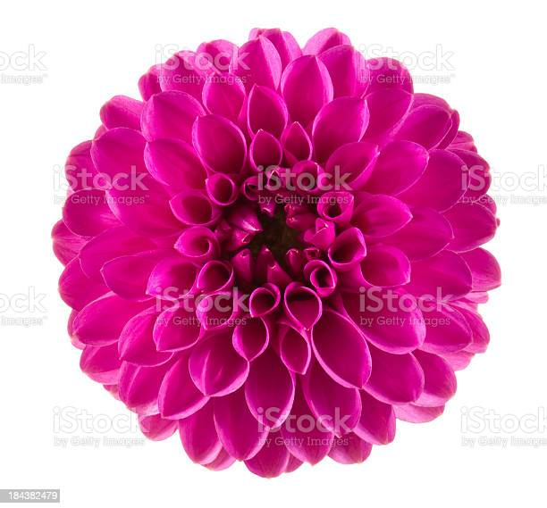 Dahlia picture id184382479?b=1&k=6&m=184382479&s=612x612&h=i7a0bmy4kvwf06meai4hyotcqgifpgb68efvvqtsba8=