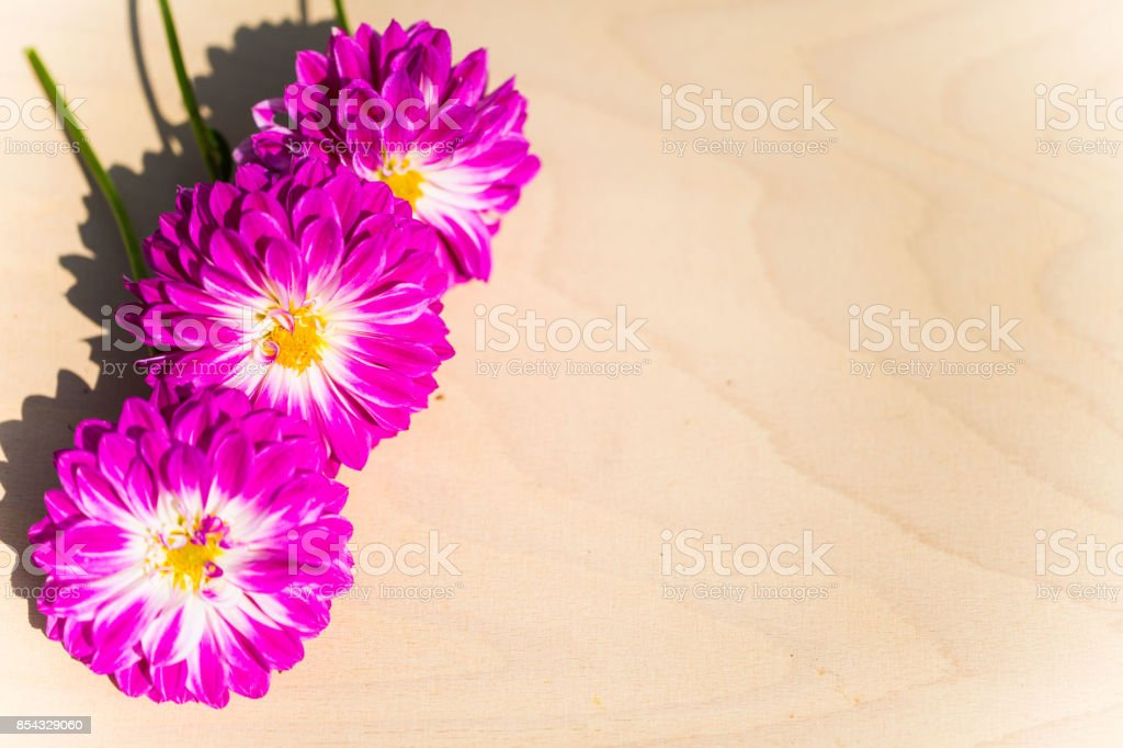 Dahlias on wood background stock photo