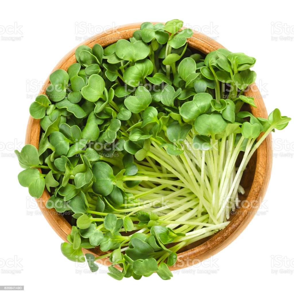 Daikon radish sprouts in wooden bowl over white stock photo