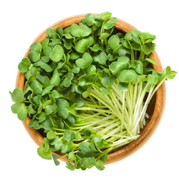 Daikon radish sprouts in wooden bowl over white Daikon radish seedlings in wooden bowl. Sprouts of winter radish, also called Japanese or oriental radish and true daikon. Raphanus sativus. Isolated macro food photo close up from above over white. microgreen stock pictures, royalty-free photos & images