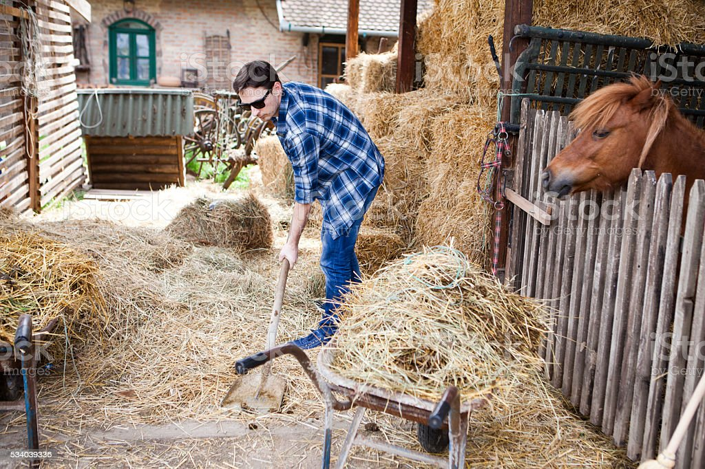 Daily life at my horses farm stock photo