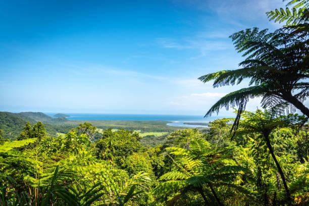 Daintree National Park, Queensland, Australia stock photo