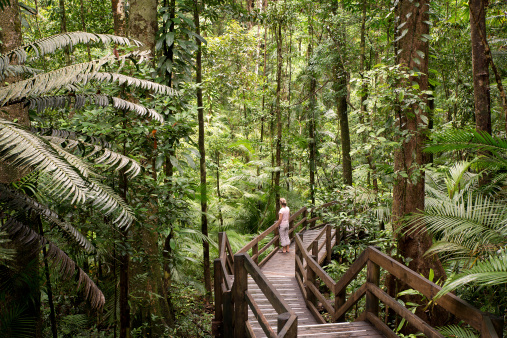 Daintree Stock Photo - Download Image Now