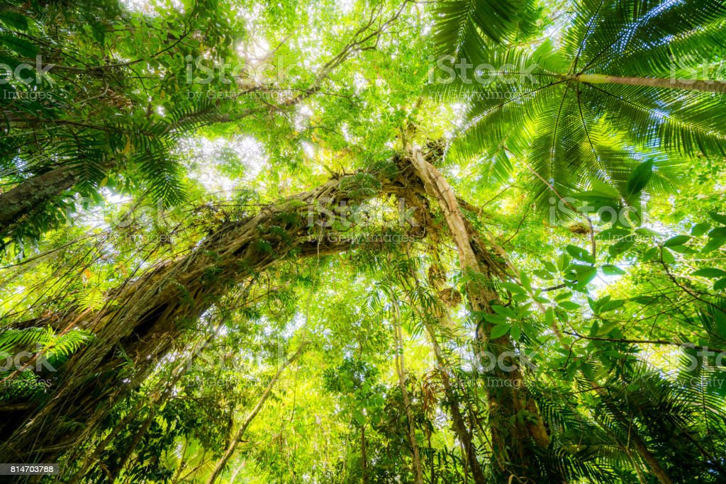 Daintree Rain Forest stock photo