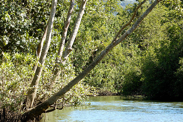 Daintree River Daintree river bank aegis stock pictures, royalty-free photos & images