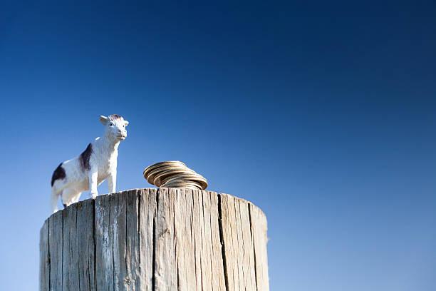 Milch Kuh und Münzen auf Zaun post – Foto