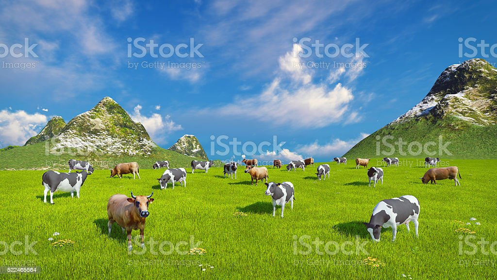 Dairy cows graze on alpine pasture stock photo