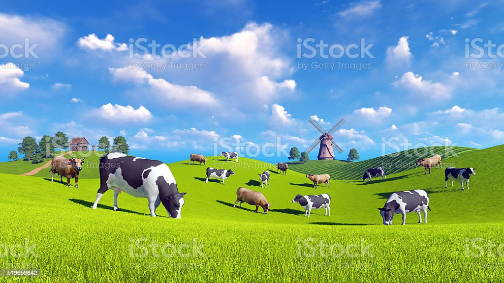 Dairy cows graze on spring meadows stock photo