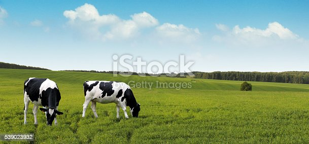 Grazing dairy cows for the dairy industry banner.