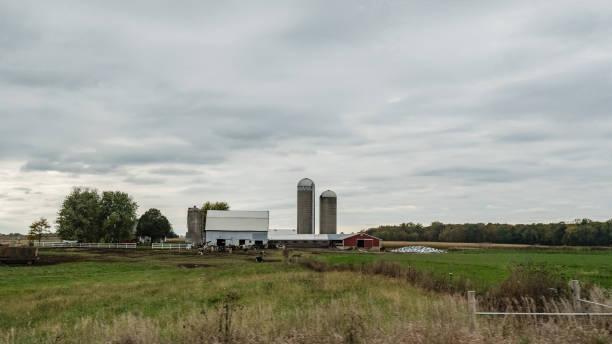Dairy Farm Background Stock Photo