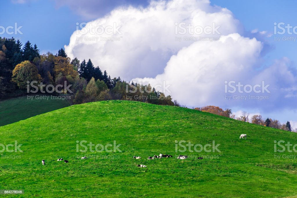 A dairy farm in autumn royalty-free stock photo