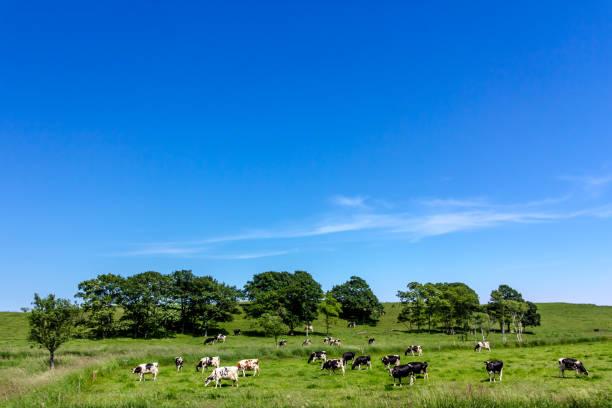 北海道の酪農場 - 北海道 ストックフォトと画像
