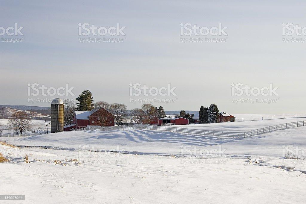 Dairy Farm In Sunlight Winter Landscape stock photo