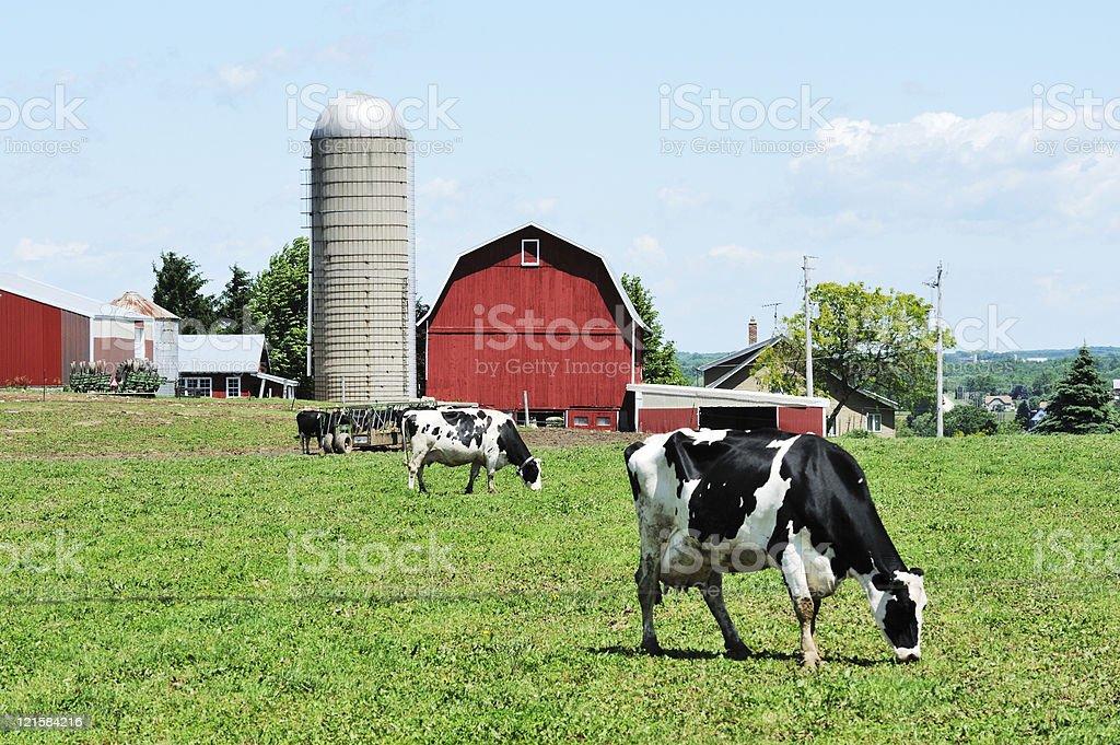 Dairy Farm stock photo