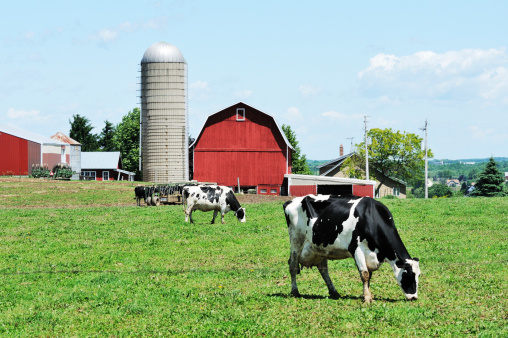 Dairy Farm Stock Photo - Download Image Now