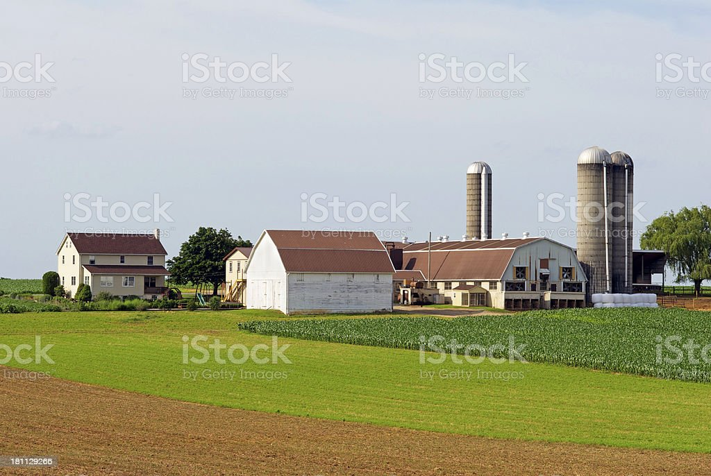 Dairy Farm with Silos in Summer stock photo